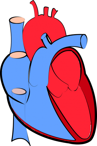 Cardiovascular Physiology Part 1: An Introduction to the Pumping Station of the Body